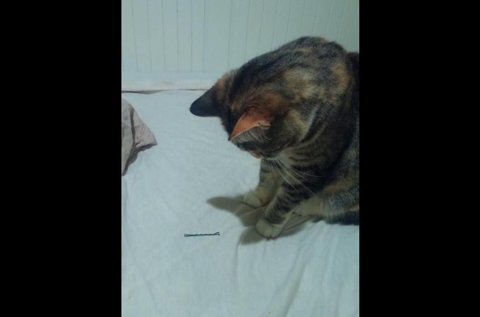 飼い主に数年ぶりの彼女が!彼女の忘れものを見つけた猫が、切ない表情を浮かべてとった行動とは!