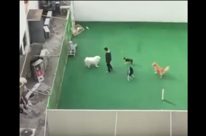 韓国のネットで衝撃が広がっているペットホテルの職員とみられる男性が犬を暴行する動画に憤りを覚える