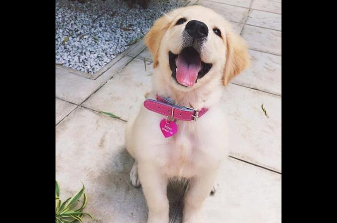【画像】施設にいた不安から解放され、里親と出会って笑顔を取り戻した犬たちの画像22枚