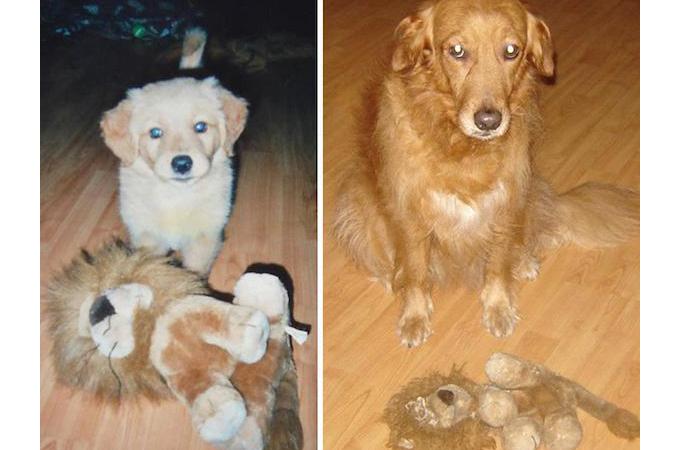 小さい頃からずっと一緒!犬や猫の成長と共に古くなったおもちゃたち画像23枚