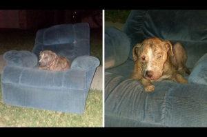 古い肘掛け椅子に座り、まるで助けを待っているかのようなホームレス犬が見つかる