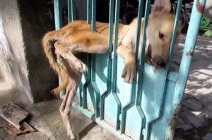 門の間に挟まり自力では抜け出せずにもがき苦しむ犬が発見される