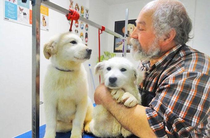 自分の人生と引き換えに950匹以上の犬たちを救うため戦い続ける男性