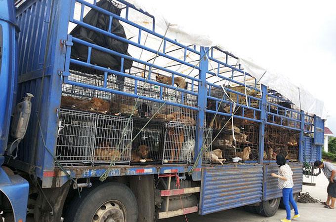 台湾は犬と猫の食肉を完全に禁止する最初のアジアの国となりました