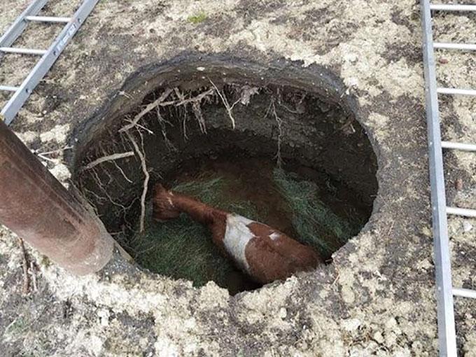 足元の地面が抜け4.5メートル下の穴の底へと落下した馬の懸命の救出劇