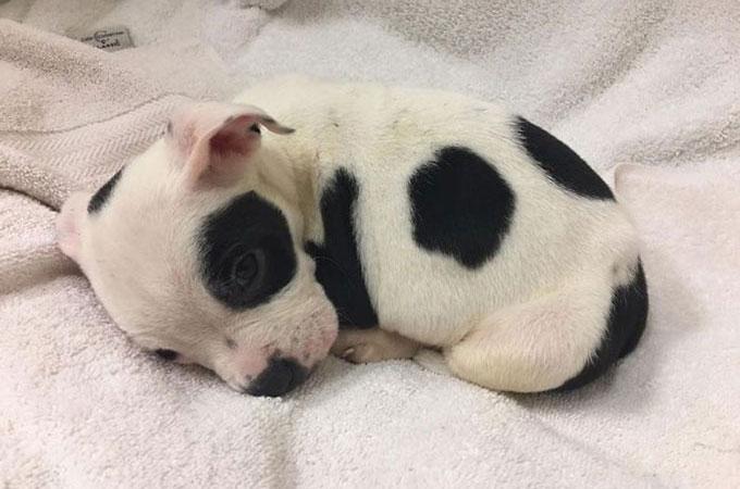 公園に捨てられた子犬の兄弟 1匹は亡くなりもう1匹は小脳形成不全であることが判明する