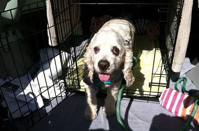 「あまりにも老いた」と捨てられた盲目で耳の聞こえない20歳の老犬