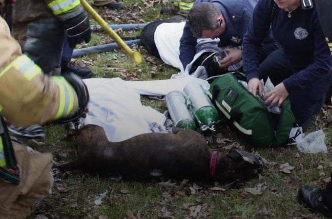 ビル火災に巻き込まれ瀕死の犬が勇敢な消防士によって救い出されるまで