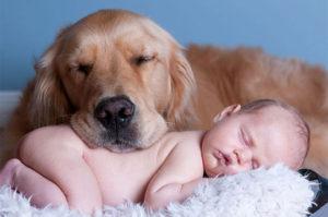 犬が枕よりも快適な睡眠のために優れていることが証明される