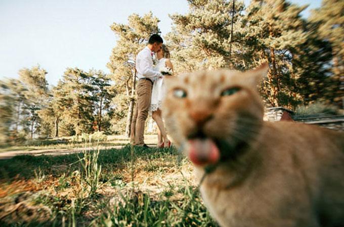 最高のショットおさめようとする瞬間を狙いジャマをする確信犯的な猫たちの決定的瞬間