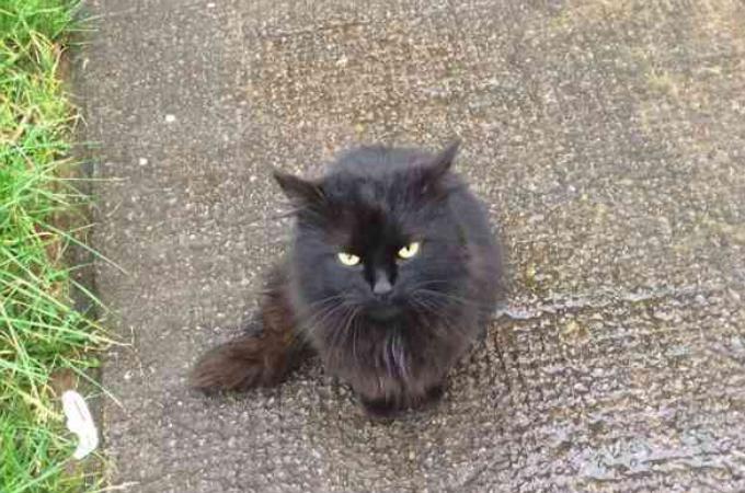 元飼い主の引っ越しが理由で捨てられてしまった猫。夫妻に保護され病院で診察したところ見つかった病とは