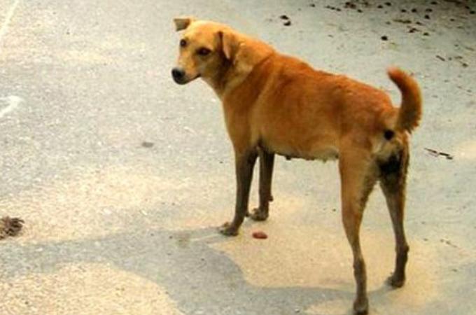 結婚式中にテロに気付き、その脅威を式場に近づけないように妨げた犬。その結果、大勢の命を救う