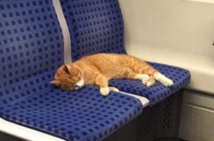 バスに珍しい乗客が!2席を堂々と使い昼寝する猫がSNSの拡散によって無事に飼い主の元へ!