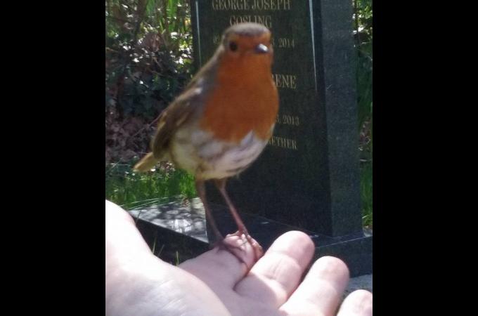 亡くなった息子のお墓で悲しみに暮れる母親のもとに現れた1羽の小鳥。その小鳥の行動に勇気づけられる