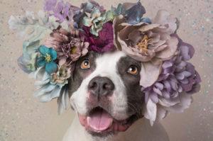 里親の見つからない犬のために、無償で撮影をした女性。そのアイディアで600匹以上もの犬たちに新しい家族が見つかる。