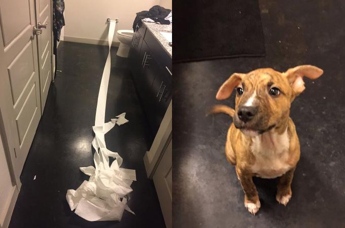 トイレを失敗した愛犬の行動が可愛すぎる!SNSに投稿すると、たちまち世界中に拡散される!