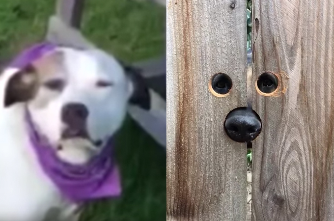 高い塀によってお隣さんと交流が出来ない犬たち。そこで飼い主が思いつき、実践したアイディアが斬新すぎる!