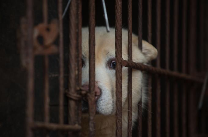 犬と猫の食用禁止に、罰金最高90万円 台湾