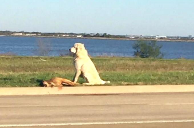 交通事故によって息絶えた仲間の隣でたたずむ犬。仲間を見送る姿に切なくなる。