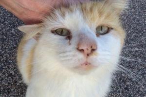 人警戒した猫を気に留め、1年以上通い信頼を得た女性。ようやく家族になれた矢先、予想もしない悲しみに包まれる。