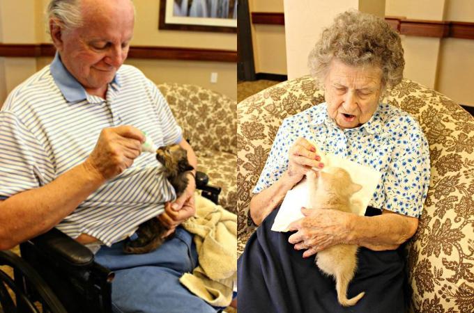 母猫に飼育放棄をされてしまった子猫たちを、老人ホームのお年寄りが愛情たっぷりに育て上げる。