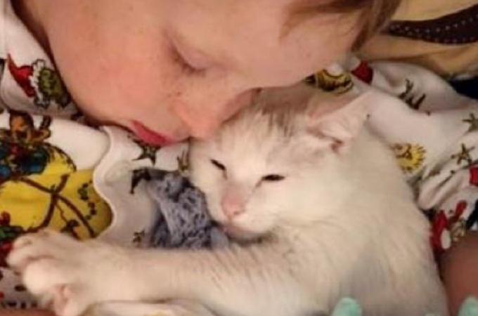 死産で我が子を失った母猫。回復したのちに、引き取られた家族との出会いでが転機となり愛する存在を見つける