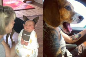 記念写真のはずが、犬のフレームインによって本来の目的とは違う写真が撮れてしまった画像20枚。