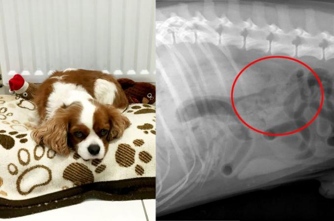 普段はお利口の愛犬が、獣医が驚いてしまう「あるもの」を誤飲してしまう!その「あるもの」とは!