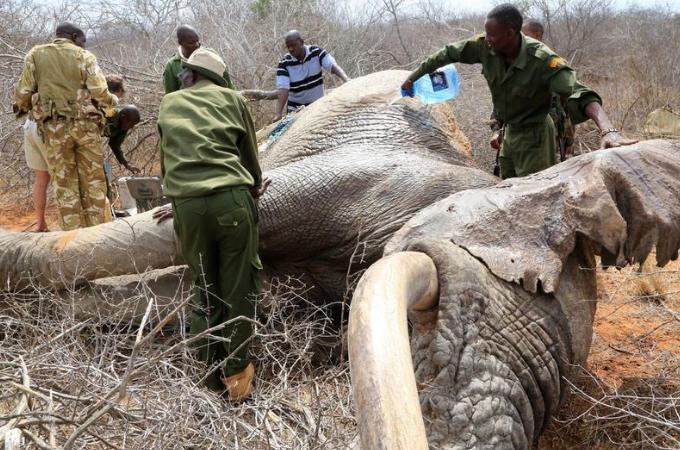 密猟によって人間の毒矢に冒されたゾウ。以前、施設に保護されて野生に還された経験があるゾウはその場所を目指す。