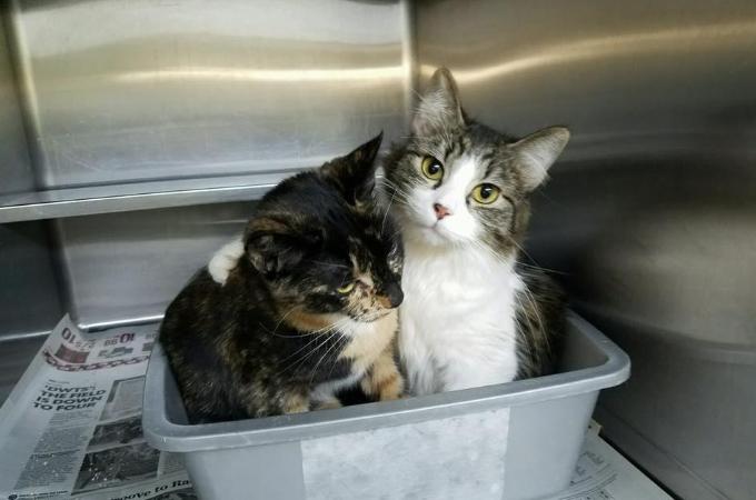 2匹の姉妹猫を保護。深い絆と肩を寄せ合い抱き合う姿に注目が集まりSNSに投稿後2時間で里親が決まる。