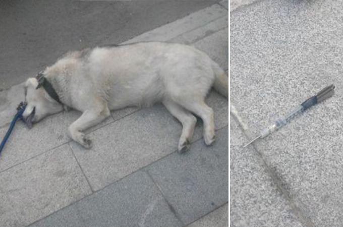穏やかな散歩のはずが愛犬の突然死。中国で起きた無差別通り魔による毒殺事件に胸が痛む。