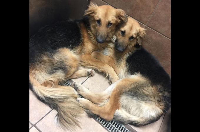 閉鎖されたシェルターから引き取られた寄り添い合って生きる2匹の犬。2匹を引き離さないための里親探しが始まる