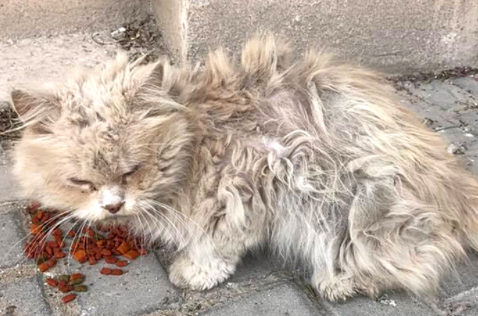 周りの野良猫からいじめられ、いつも独りで孤独だった野良猫が新しい人生をスタートさせるまで。