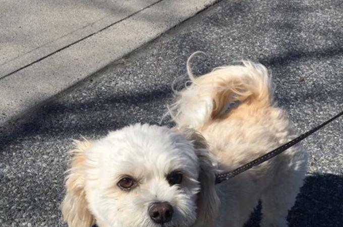 可愛いはずの愛犬の写真をTwitterに投稿した男性。それを見たユーザーからは「怖い!」との声が!その理由とは!?