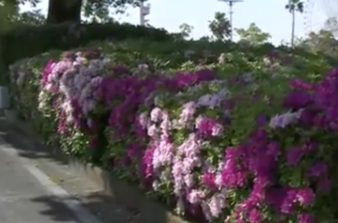 名古屋の公園でネコが死んでいるのが相次いて見つかる。そして、遺体の一部から劇物が検出され警察が調べを進める