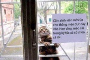 ドアの外から中を覗き込む愛らしい猫。そして、そこには「このネコを室内に入れないで」の張り紙が!その理由とは!