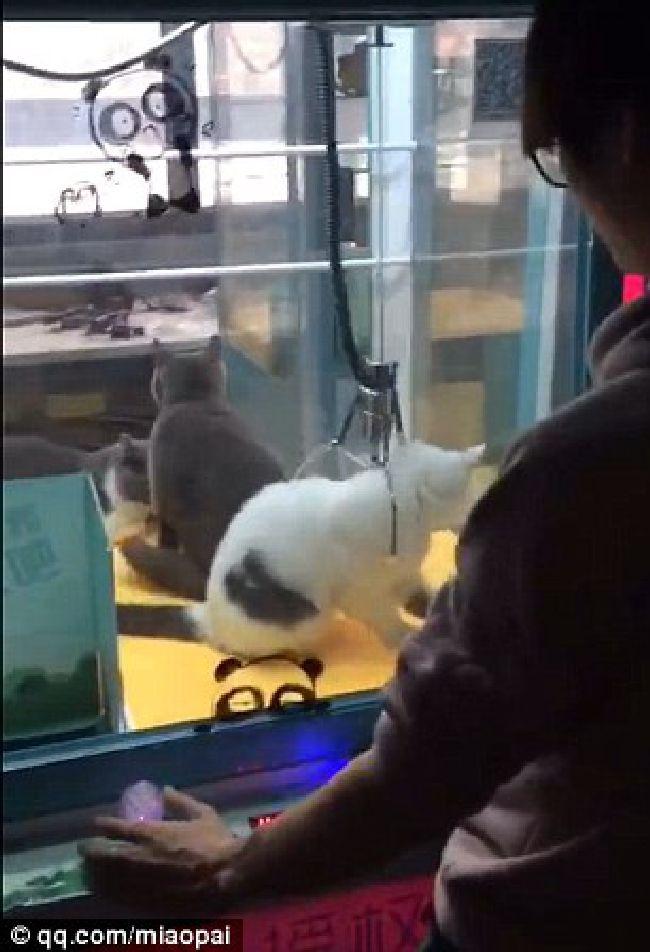 ゲーム クレーン 中国 犬