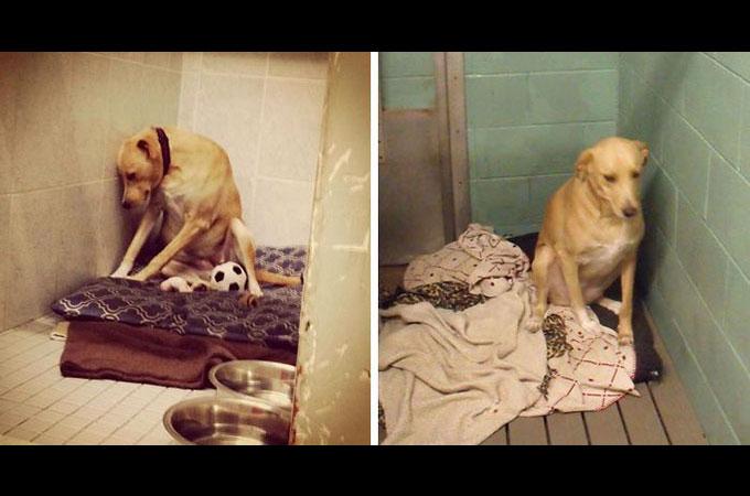 幾度と家を失った「世界で最も悲しい犬」に残されたのは殺処分と言う選択肢