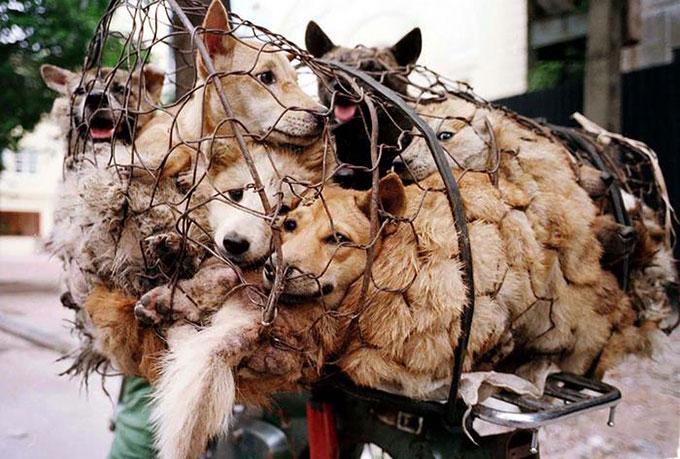 中国の楡林市で行われる犬肉の祭典「楡林犬肉祭」が一時的に禁止に