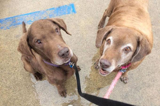 引き取り手の見つからない盲目の子供と盲導犬としてサポートをする母犬