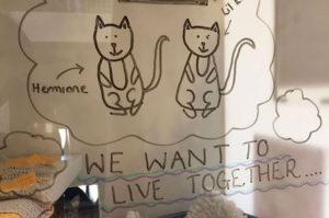 1匹でも多くの猫たちに永遠の家族を見つけるためシェルターのスタッフが考案した素敵なアイディア