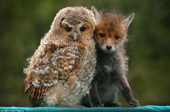 種は違えども絆は確かに存在する!世界平和のため動物から人間が学ぶべきこと