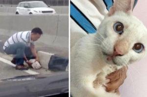高速道路で脚を骨折しうずくまる猫を救うため危険をかえりみず行動する男性