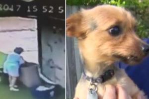 愛犬を巡り近隣トラブルになっていた女性が帰宅。すると愛犬がゴミ箱の中に。犯人とその後に怒りがこみ上げる