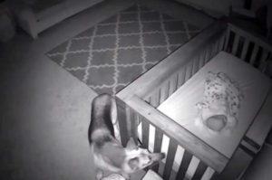 深夜2時に赤ちゃんが眠る部屋に入り込む愛犬。監視カメラに映った犬の優しさに思わずほっこり!