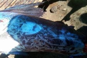 フィリピンの海で発見された全身にタトゥーの入った魚。不思議な光景に現場は困惑。そして、その原因とは?
