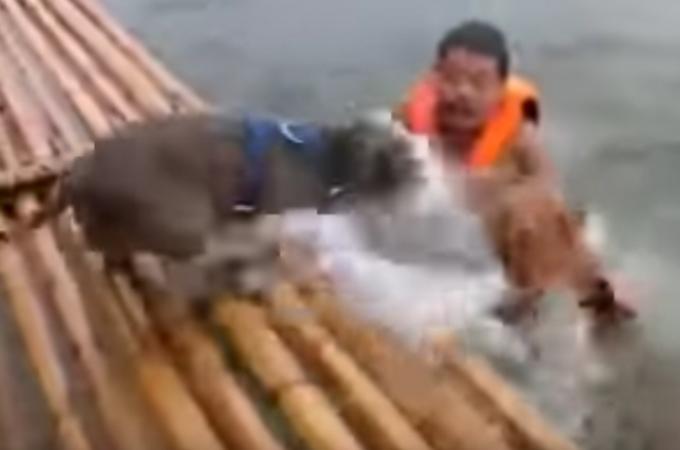 飼い主さんが溺れたと判断した救助犬2匹の犬たちが取った素晴らしい連携プレーがこちら。