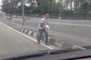 高速道路を走行中にうずくまる子猫を発見した男性。適切な対応によりスムーズに子猫を保護することに成功。