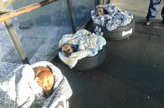 ブラジルのバスターミナルが、野良犬のためを思って作った冬を乗り切るためのアイディア。そこに隠された理由とは