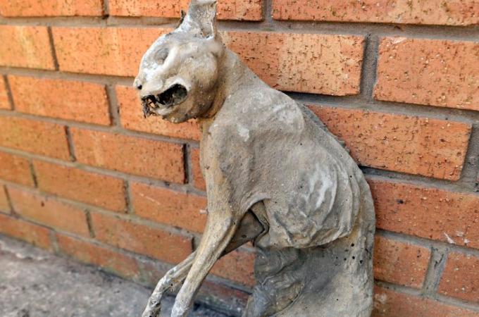 別荘の工事の中に瓦礫の中にミイラ化した猫を発見。死後30年は経過していると思われるその姿に言葉を失う。